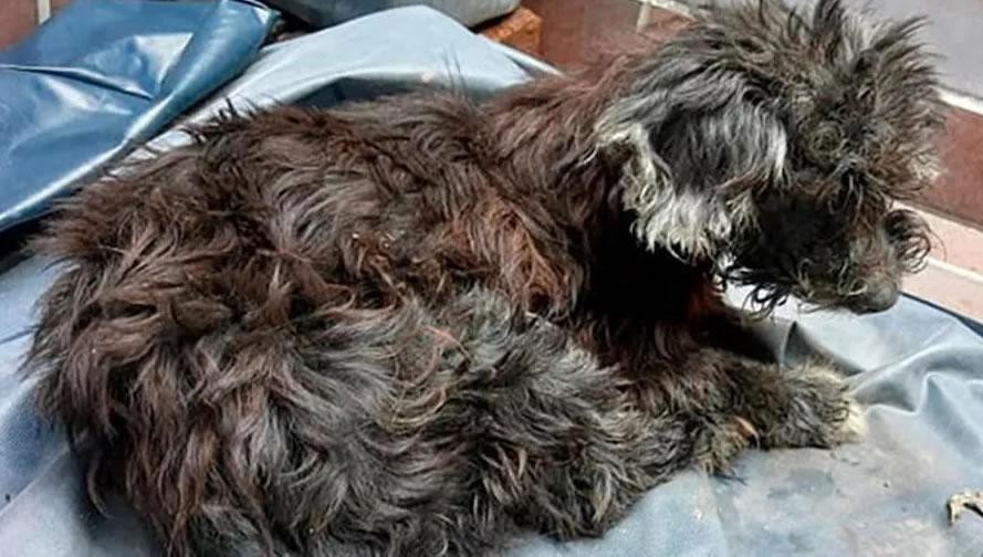Cane abbandonato nella fogna con occhi incollati