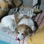 Cane adottato da un carabiniere