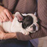 Vivere con un cane allunga la vita