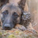 Il cane che ha scelto una civetta come amica