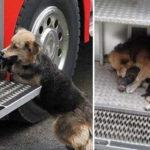 Cane eroe, salva i suoi 5 cuccioli da un incendio