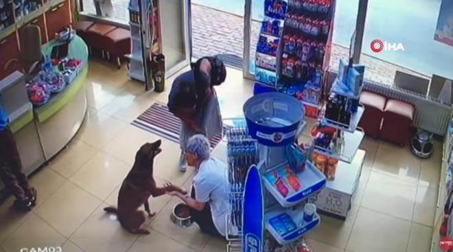 Cane randagio ferito chiede aiuto in farmacia