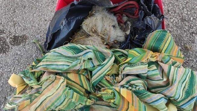 Cucciolo abbandonato a Foggia nella spazzatura