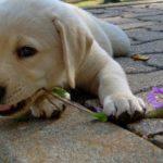 curare il cane con le erbe
