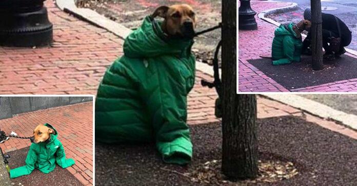 Donna dona la sua giubba ad un cane