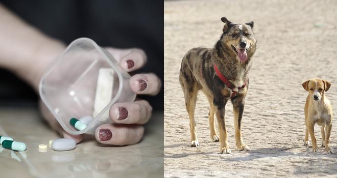 Donna ingerisce per sbaglio pillole avvelenate per cani