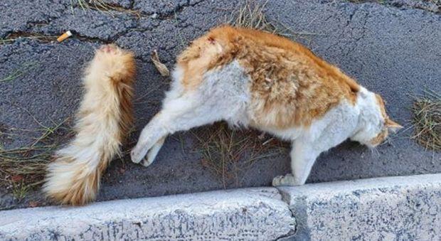 Gatto ucciso a Brindisi con un petardo