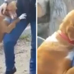 Giornalista scrive una storia sul canile, il cane lo abbraccia e lui decide di adottarlo