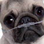 il-cane-respira-male