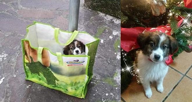Storie di cani abbandonati: Natalia abbandonata il giorno di Natale