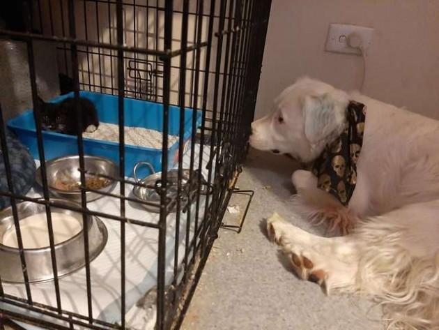 shiro, cane sordo e cieco si prende cura di animali abbandonati