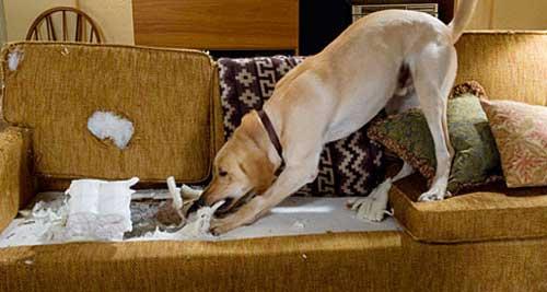 sindrome da abbandono nel cane