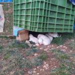 8 cuccioli neonati abbandonati