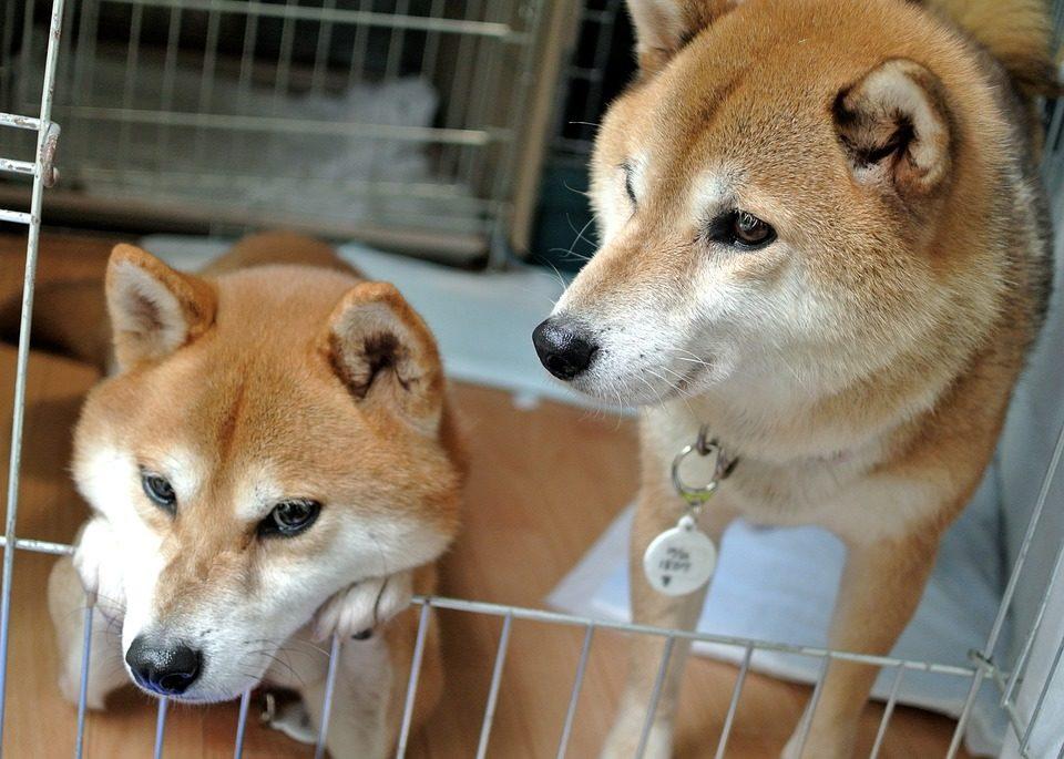 San Valentino, a Foggia un gesto d'amore per cani e gatti abbandonati