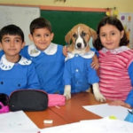 La storia del cane randagio primo della classe