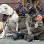 Senzatetto salva 6 cani