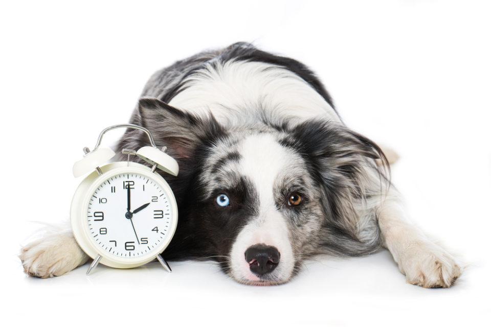 Cambio orario cani e gatti