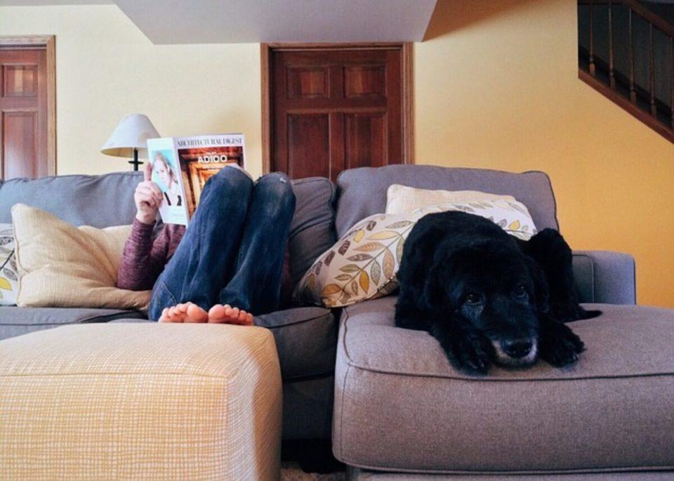 Coronavirus post epidemia per cani e gatti