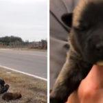 Abbandona 8 cuccioli buttandoli dal finestrino di un'auto