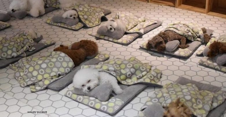 Asilo nido per cani, arriveranno anche in Italia?