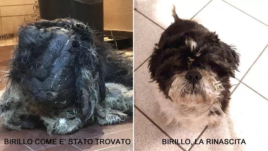 La rinascita di Birillo