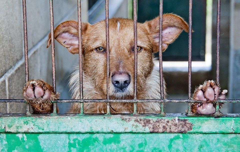 Italia, Cani abbandonati a causa del coronavirus