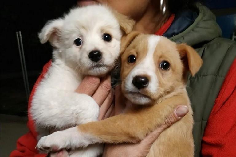 Storie di cani abbandonati