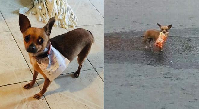 Il suo cane va a comprargli le cheetos!