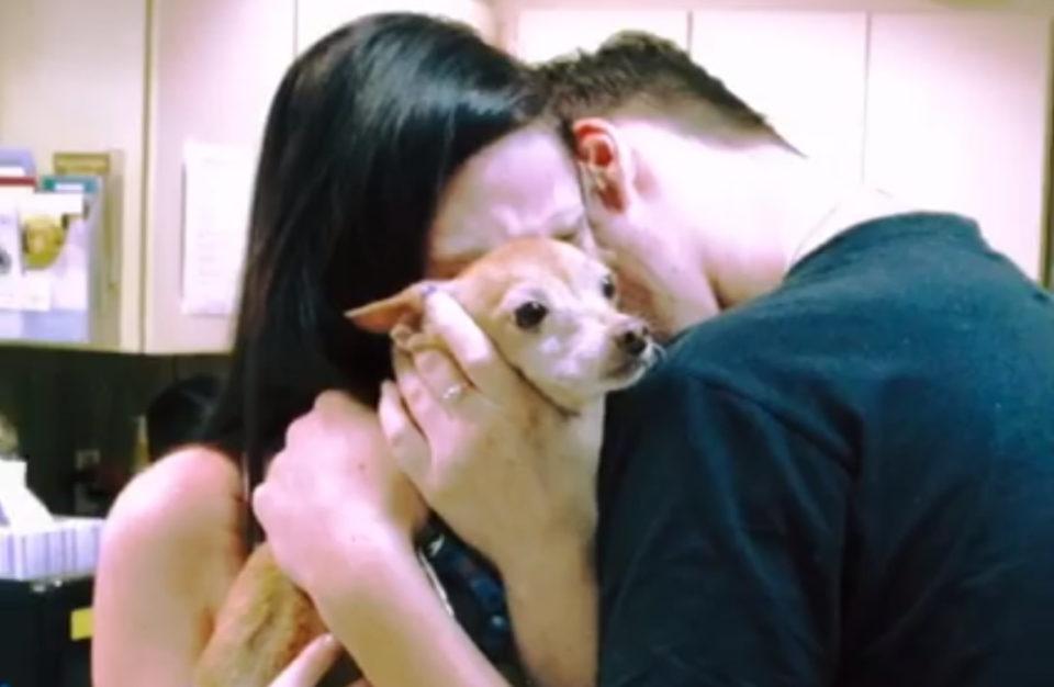 La storia del Chihuahua Alex
