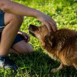 Coronavirus, modulo autocertificazione cane