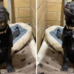 La storia del cucciolo che sorride