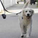 emergenza coronavirus e cane a passeggio