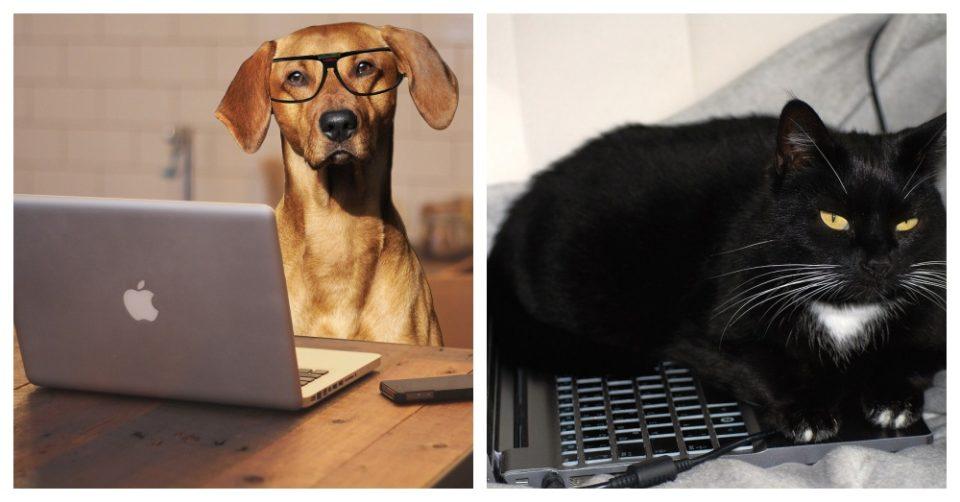 Lavorare da casa ai tempi del Coronavirus, un nuovo esercito di collaboratori tra cani e gatti