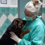 Monica Pais appello contro abbandono di animali