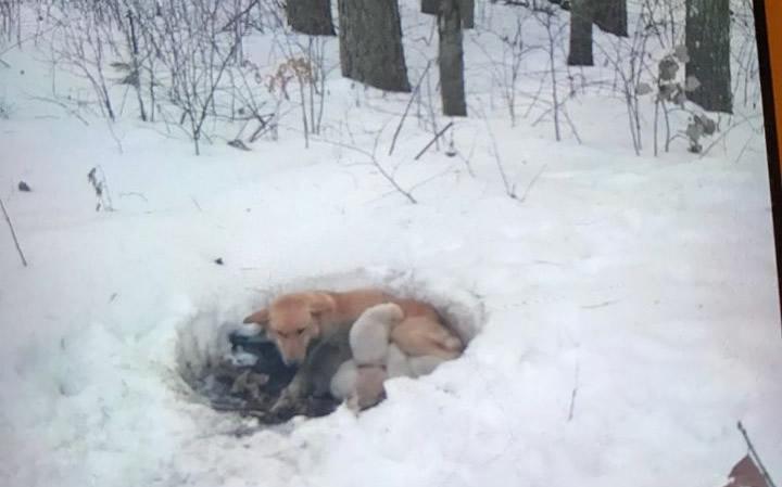 Partorisce sei cuccioli tra la neve