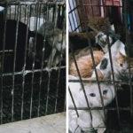 In Cina riaprono i mercati con carni di animali