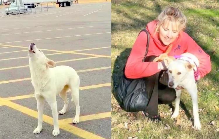 Storie di cani abbandonati: Samantha