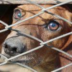 stop adozioni nei canili