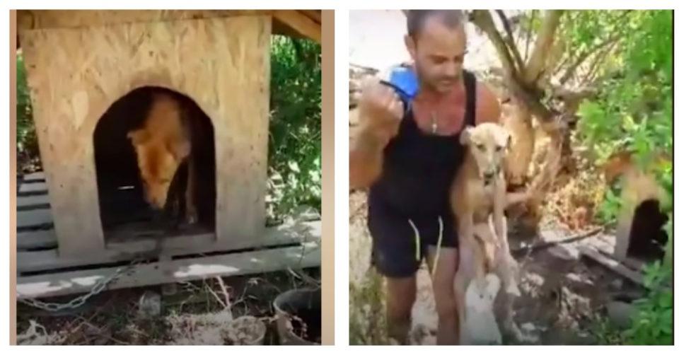 Storie di cani abbandonati, Takis salva cane legato ad una catena