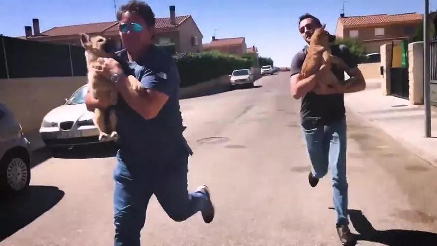 Veterinario rapisce due cuccioli