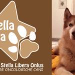 Associazione Stella Libera Onlus