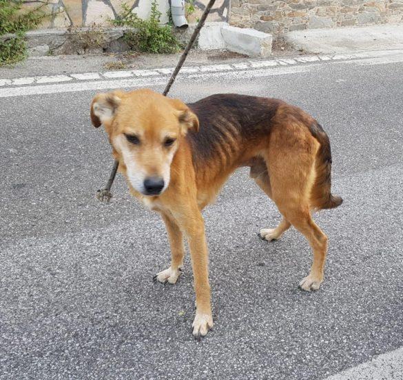 Uno dei cani recuperati - Foto: Lndc Ufficio Stampa