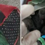 Orrore a Foggia, cuccioli rinchiusi in buste di plastica e buttati nella spazzatura