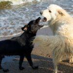 cane abbaia agli altri cani