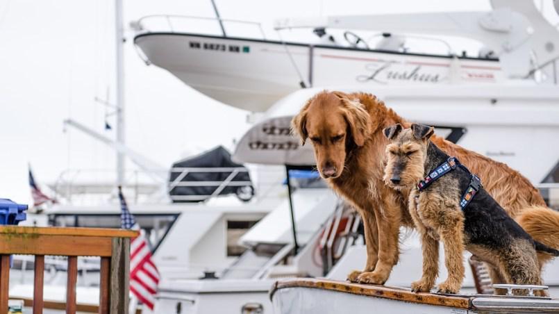 Ecco come viaggiare con il tuo cane su barca o nave da crociera