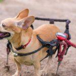 carrellino per cani