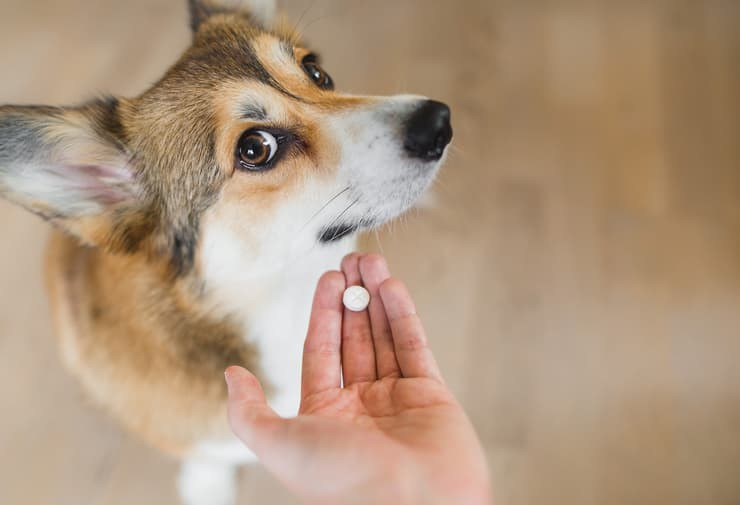 pillola al cane