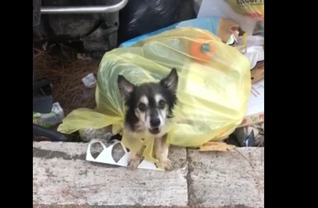 Cane buttato nella spazzatura a Roma