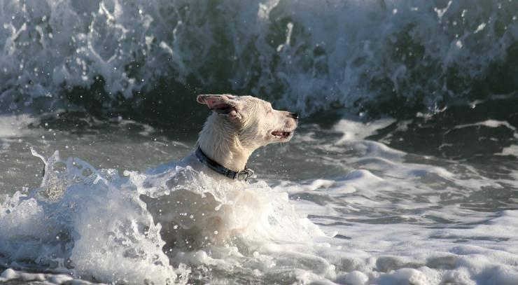 cane sta annegando