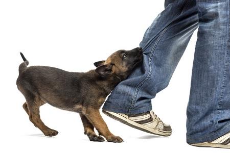 cane morde i piedi